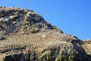 île aux oiseaux